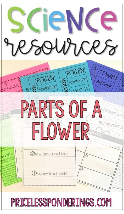plants pollination  parts   flower worksheets