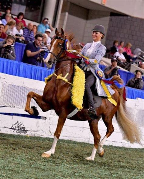 hackney pony reblog