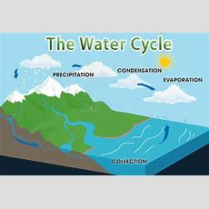 Water Cycle Quiz  Free Interactive General Quiz Questions For Kids