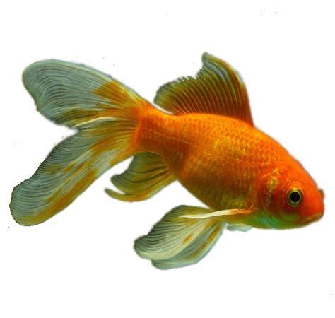 cuisiner poisson congelé pourquoi il faut congeler le poisson pour le manger cru