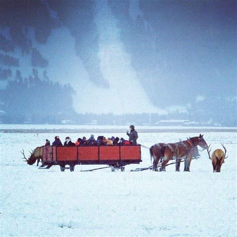 Ride Through The National Elk Refuge By Sleigh In Jackson