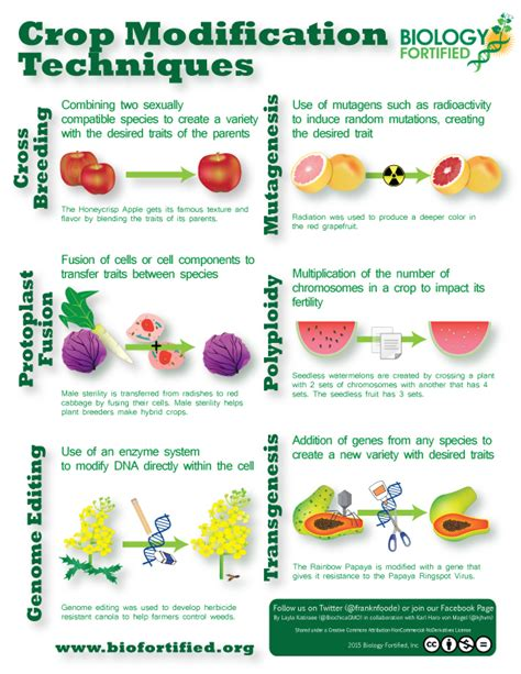 crop modification techniques infographic biology