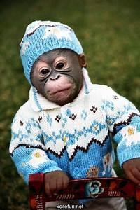 Baby monkey all bundle up! | Funny Animals | Pinterest | Monkey Super cute animals and Animal ...