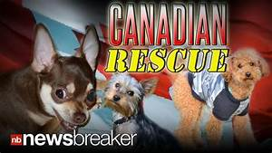 Canadian rescue dogs displaced by las vegas foreclosure for Dog rescue las vegas nv