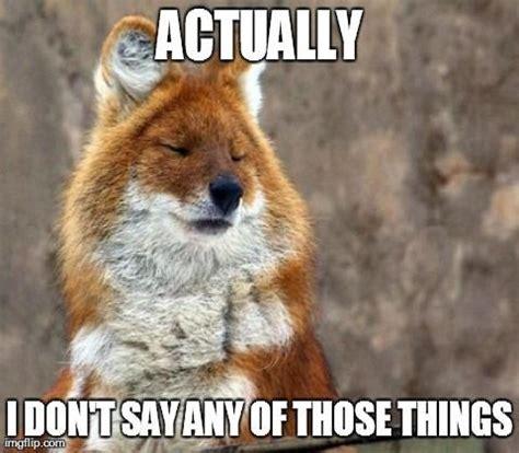 Fox Memes - fox meme funny pictures quotes memes jokes
