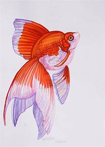17 Best images about (gold)fish on Pinterest | Goldfish ...