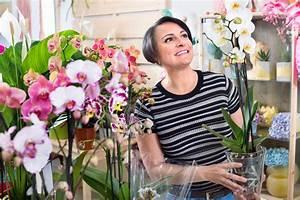 Geschenk Verpacken Folie : orchidee originell verpacken so trumpft sie als geschenk ~ Orissabook.com Haus und Dekorationen