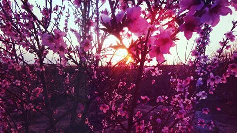 bakgrundsbilder traed gren blomma vaext solljus blad