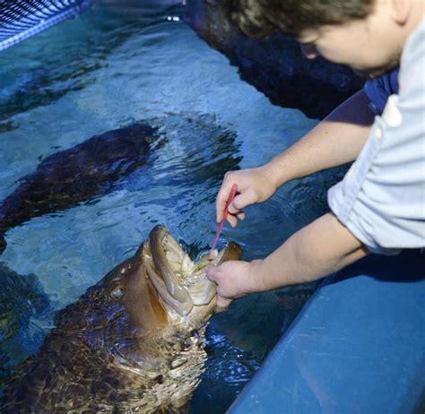grouper aquarium nagoya teeth longtooth japan