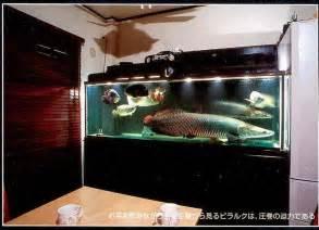 Arapaima Fish Tank