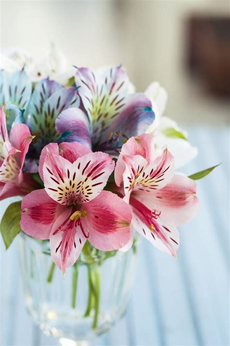 romantic flower meanings symbolism   kinds