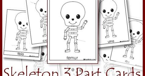 skeleton labeling  part cards fun   learn