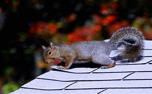 How To Get Rid Of Squirrels Chipmunks Guide