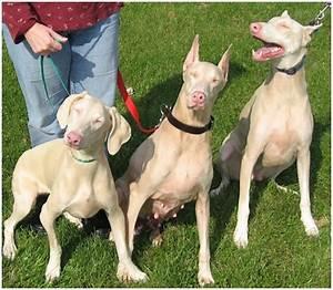 Human 'Albino' Gene Found in Dogs