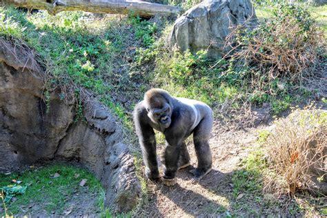 usa zoos animal zoo kingdom theme disney park eden passport passporttoeden