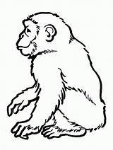 Chimpanzee Coloring Pages Printable sketch template