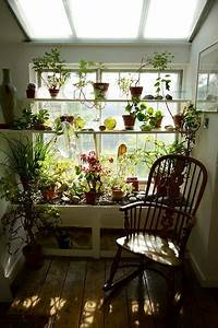 36 best images about interior design plants on pinterest for Interior decorating houseplants