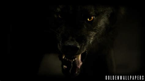 cool black wolf wallpaper dazhew gallery