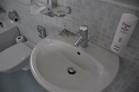 small black ants  bathroom sink    ideas