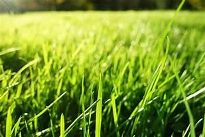 Gazon En Plaque : centre de jardinage p pini re et am nagement paysager ~ Premium-room.com Idées de Décoration