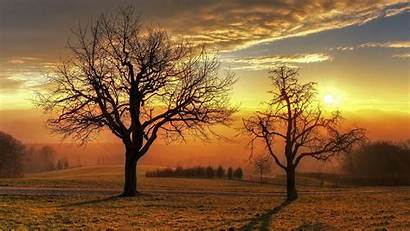 Sunset Trees Tree Wallpapers Nature Winter Above