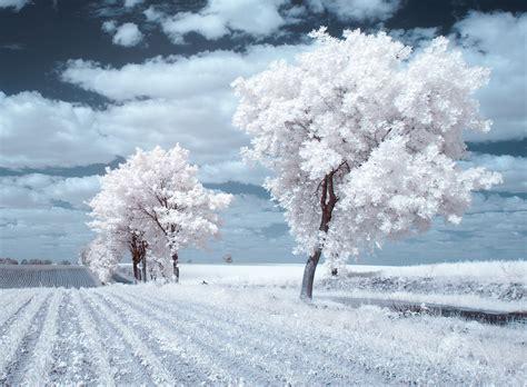 la beaute des arbres en infrarouge par przemyslaw kruk