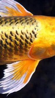 Golden Beauty Stock Photo - Download Image Now - iStock