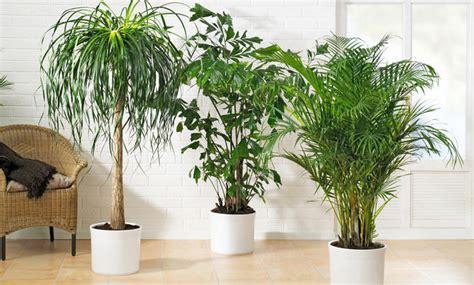 Zimmerpflanzen Für Dunkle Standorte