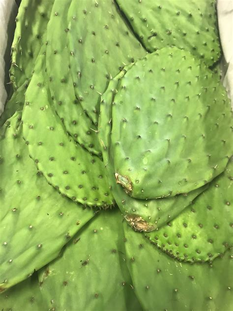 Cactus Leaf | Buffy Delivers