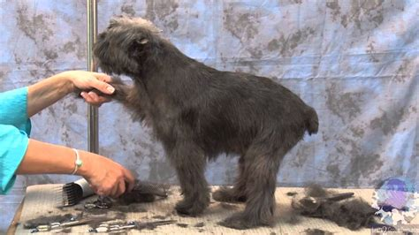 How To Groom Dogs The Affenpinscher With Judy Hudson You