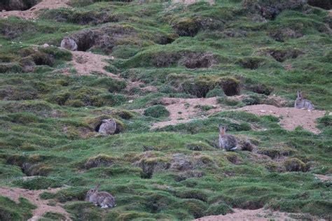 cuisiner le lapin de garenne éducation à la nature les mystères du lapin de garenne
