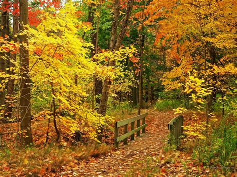 Autumn Wallpaper by Maritza Craig Autumn Wallpaper