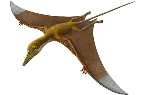 Pterosaurs, Flight In The Age Of Dinosaurs