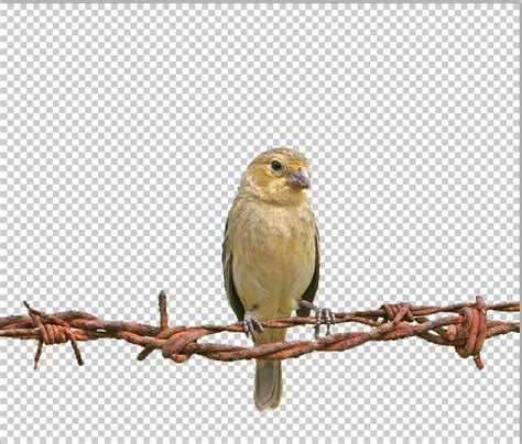 Photoshop Delete Background How To Remove Image Background In Photoshop Tutorial