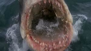 Jaws (1975) - Reviews   Now Very Bad...