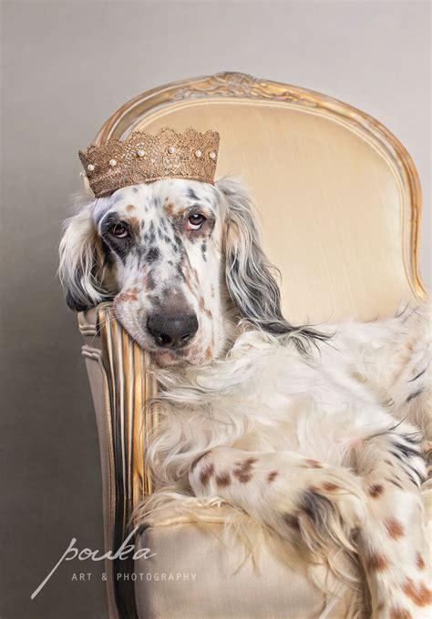 pouka fine art pet portraits images  pinterest
