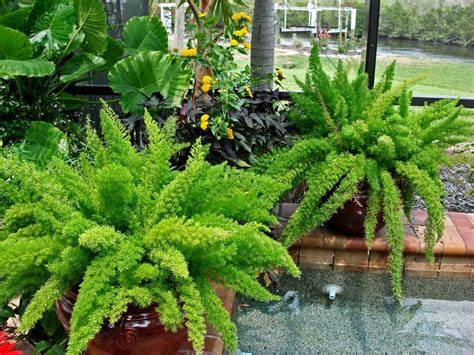 69 Best Container Gardening In Miami Images On Pinterest