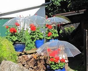 Wann Geranien Pflanzen : witziger regenschutz f r geranien in oberstdorf entdeckt ~ Lizthompson.info Haus und Dekorationen