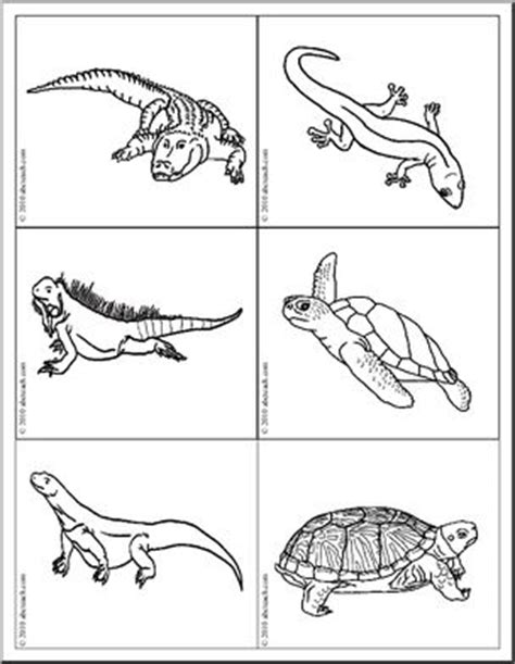 reptile and hibian picture flashcards identify the