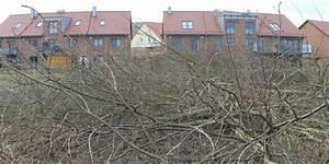 Stadt Greifswald Stellenangebote : greifswald stadt erstattet anzeige wegen illegaler baumf llung oz ostsee zeitung ~ Orissabook.com Haus und Dekorationen