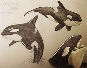 Killer Whale Drawings by hollywood714 on DeviantArt