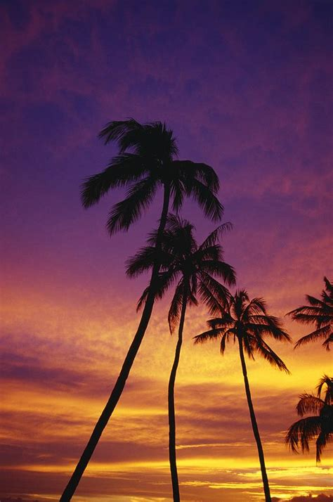 palm tree silhouettes sunset waikiki photograph by selection craig tuttle