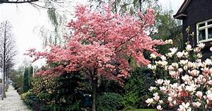 Frühblühende Sträucher Frühjahr : baume fur den vorgarten ~ Michelbontemps.com Haus und Dekorationen