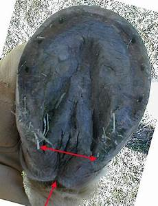 What Is Hoof Contraction