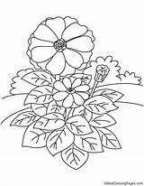 Zinnia Coloring sketch template