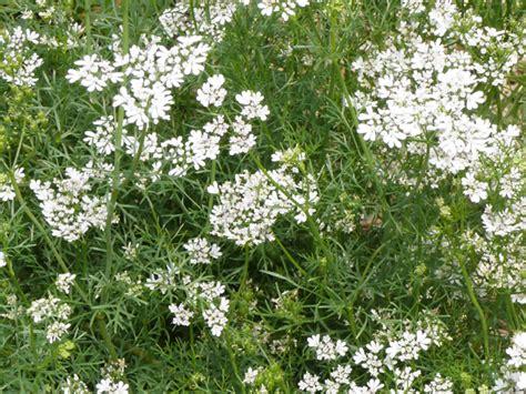 flowers needed in a vegetable garden organic
