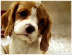 Sad Cute Puppies Sad p...Sad Puppy
