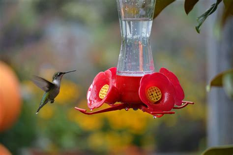 Attract Hummingbirds To Your Backyard