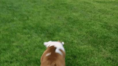 Playing Football Animals Bowl Roll Catch Perfect