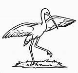 Coloring Stork Storks Coloringbay sketch template